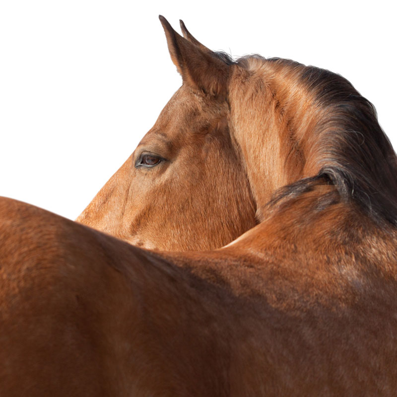 Equine-Assisted Psychotherapy (EAP)